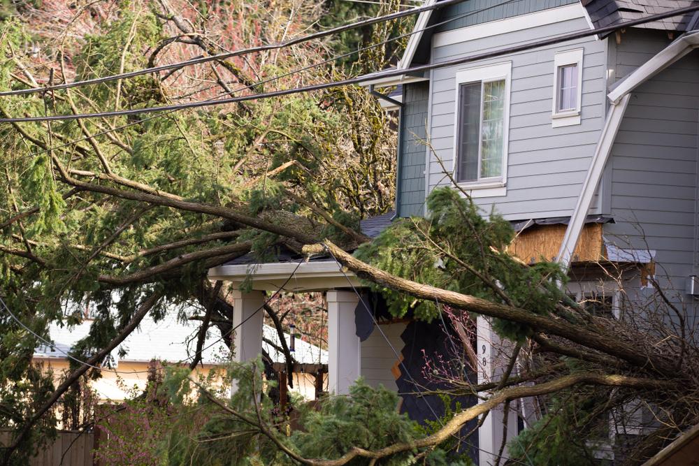 House, storm, tree damage